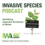 Invasive Species Podcast- Episode 3- Identifying Japanese Knotweed in Winter