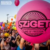 FoA Sziget #special for Boilernaya WoolyBully