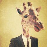 Minimalistic/Animalistic