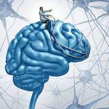 Mental Disorder (PALMARIGEN)