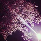 SakuraRemembrances,Ambient Impromptu for Piano No.13