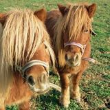 Pony Island: A Baltimore Weekend + Some Jokes, August 24, 2015