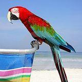 La Guacamaya de la Playa