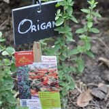 Histoire du jardin potager, par Florent Quellier