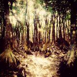 Jungle & HIphop Short Mix