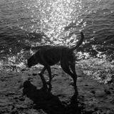 shadows&reflections