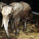 FRÜHSTÜCK 22.03.17 - Chronique protection animale de Line Jung avec aujourd'hui : La vie de Cirque !