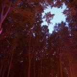babylon escape 2016 lviv forest chill mix