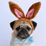 Easter Bunny Beats