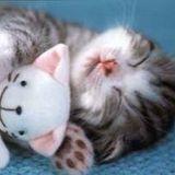 L'heure de la sieste #1 / Nap time #1