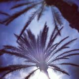 Cali skies