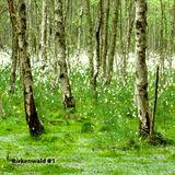 Birkenwald #1