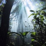 It's A Jungle Ting - Vol 1
