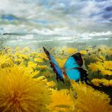 Thanos Georgopoulos - Chasing Butterflies