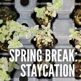 Spring Break: Staycation