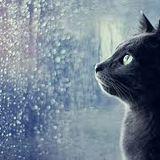 White Line #59 - Cold Rain