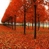 Minimal Autumn Mix by Pavel Pachouli