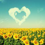 dk - Smells Like Sunshine