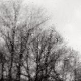 Pastoralia #24 (Dusty Rain Edition)