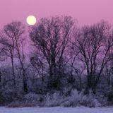 moonlight sonata 005
