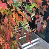 Mind the Gap - Autumn