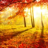 Pure & Passion Autumn Edition Mini-Mix