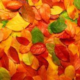 Mark Klatskla Autumn Mix 2