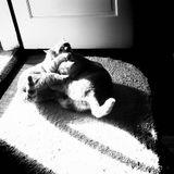Resonance.fm - Catfight # round 2