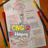 CNS 2 - Dr Hegazy [histology]