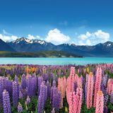 Liquid Lowdown 25-01-2016 on New Zealand's Base FM 107.3