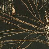 ZOOECHO RECORDS #26 Great Horned Owl / Puchacz wirginijski (Fatih Tuter aka Dubatech)