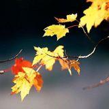 Dj Set November 2012