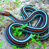 Snakes #13 - 23/12/11 - on RadioBasePopolare