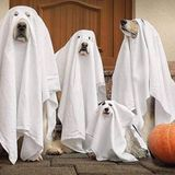 Afternoon Delight 013 - Halloweeeno I ain't afraid of no ghost mix