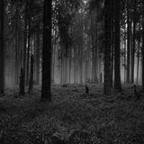 AudioPSIa aka M3chanical dB - Psychoza #01 (Dark Forest Mix)