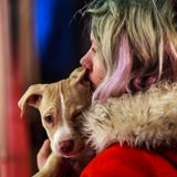 Puppy Love Mix