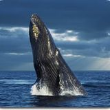 Whale Wars Podcast Podcast