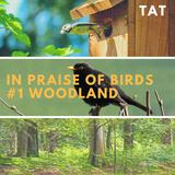 In Praise of Birds #1 - Woodland