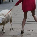 Town Sheep - Blutch Watson Mini Mix