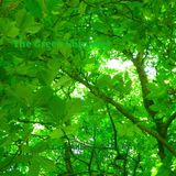 The Green Shimmer - 1hr of Spiralling Grooves