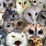 11#4 / Owl's night long avec le collectif Stix (les invités)