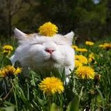 Catnip 1 (RooMinetMix)