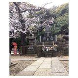 COLT+RANE : Sakura