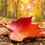 """31/10/2010 - """"Autumn's Beginning"""""""