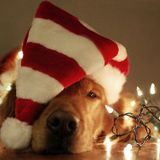 SPACE DOGS RADiO #miXtape 026 - 12 COCKTAiLS OF CHRiSTMAS