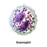 "iTRay ""EOSINOPHIL"""
