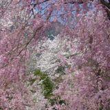 nucleus of spring 2013