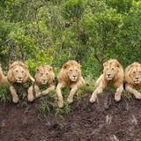 Lion-Hearted - June 2014 - (Reggae, Ragga & Dancehall)