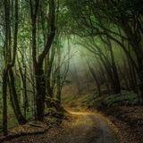 Wandering Mind - Night Spirits