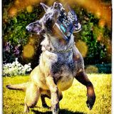 GitDown- Dreh Dog- (GDW)